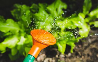 The Best Vegetables for Gardening Beginners
