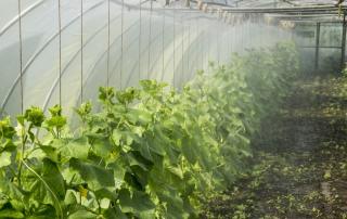 Rainwater Tank for Garden Use